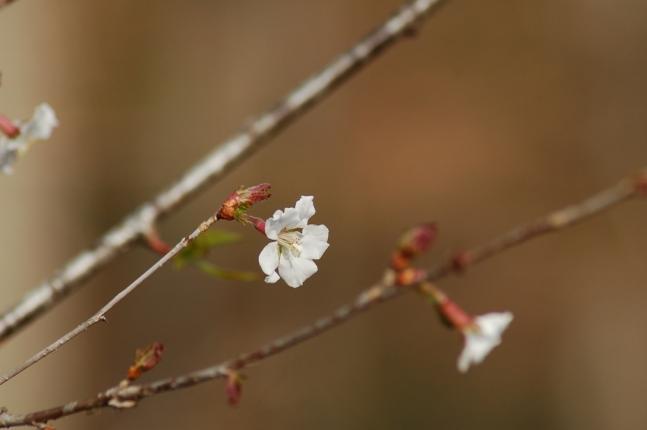 2013-04-18こめらの森周辺にて (4)