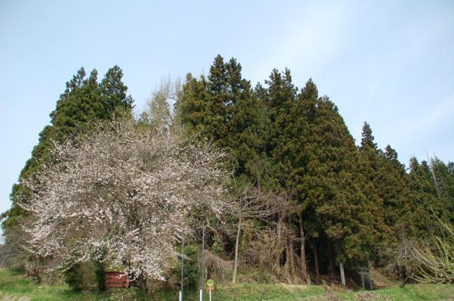 2013-04-28 (13)