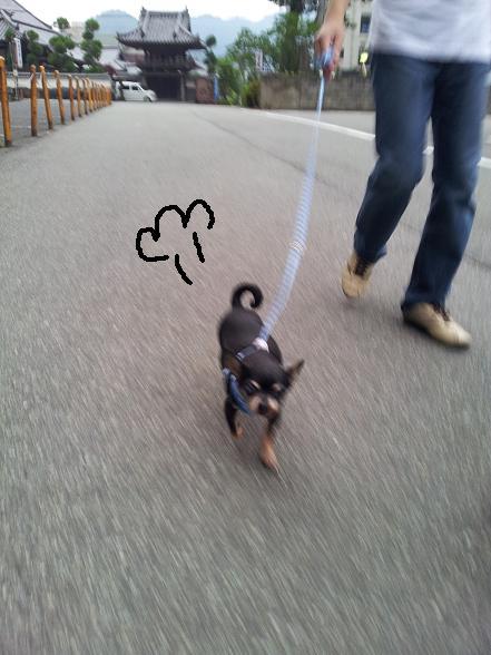 豆お散歩withハーネス