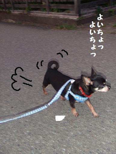 豆散歩withハーネス2