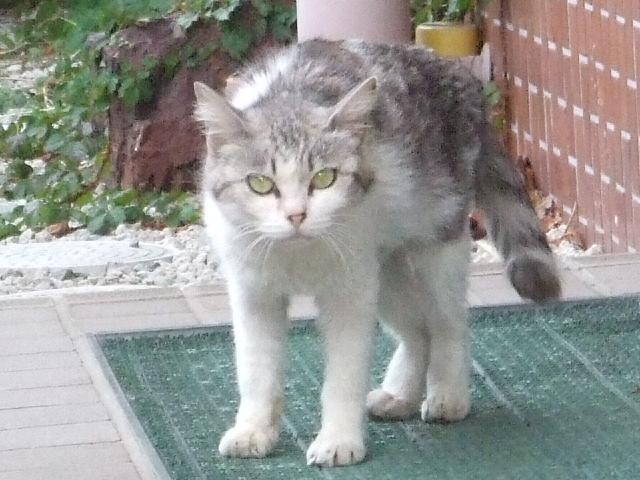 お母さん猫3