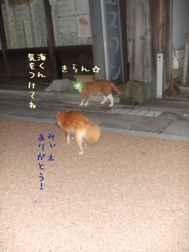 みぃ太脱走8-6④