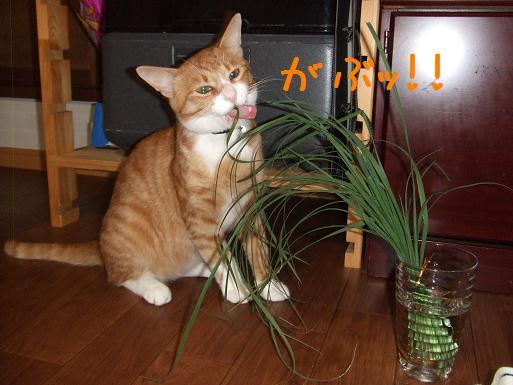 みぃ太猫草3