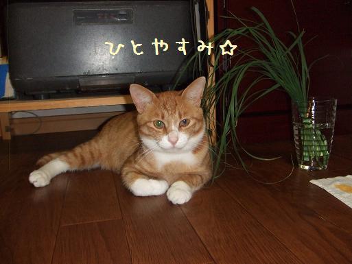 みぃ太猫草4