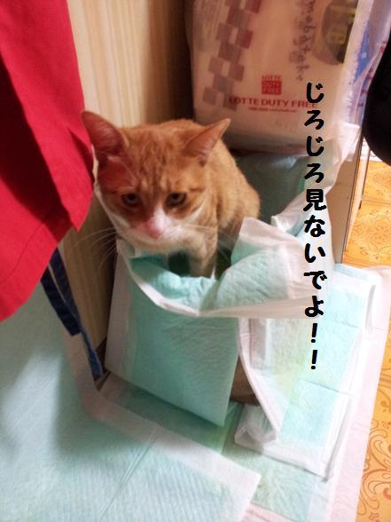 みぃ太トイレ2