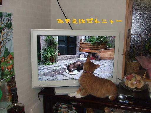 みぃ太猫歩きを見る
