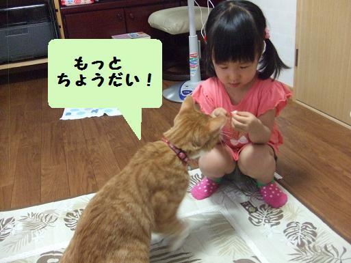 心花ちゃんとみぃ太2