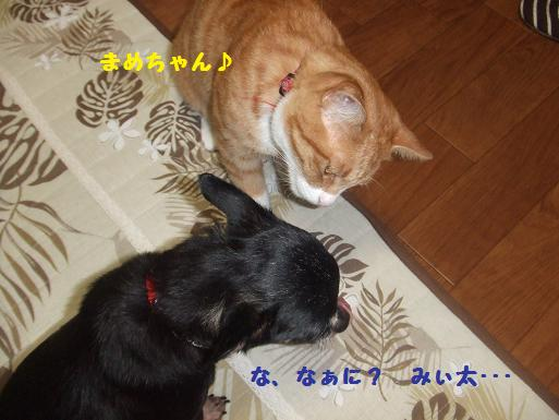みぃ太と豆8月