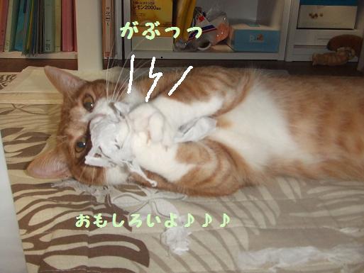 みぃ太ティッシュ2