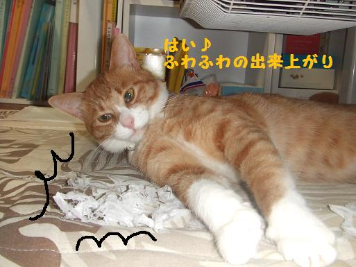 みぃ太ティッシュ3