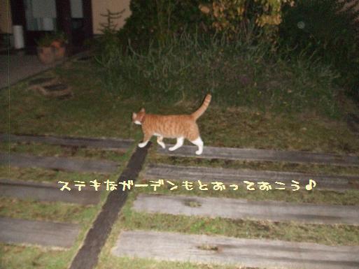 みぃ太夜散歩3