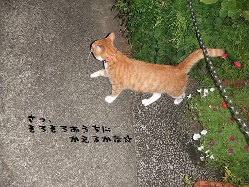 みぃ太夜散歩5