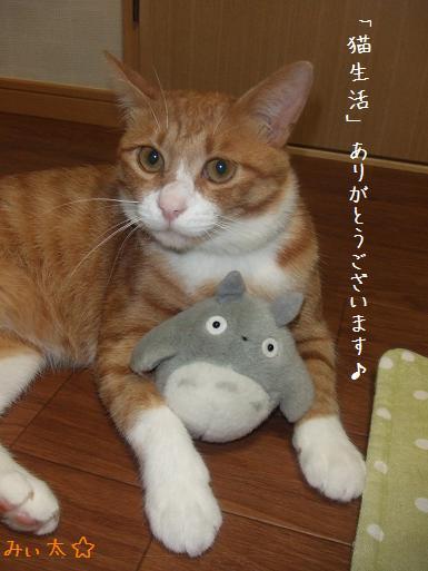 みぃ太猫生活御礼9月