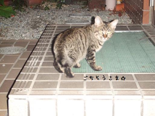 キジ子ネコ②917