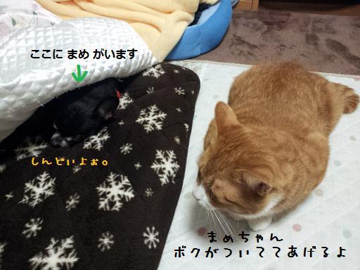 豆血尿でダウン&みぃ太①1016