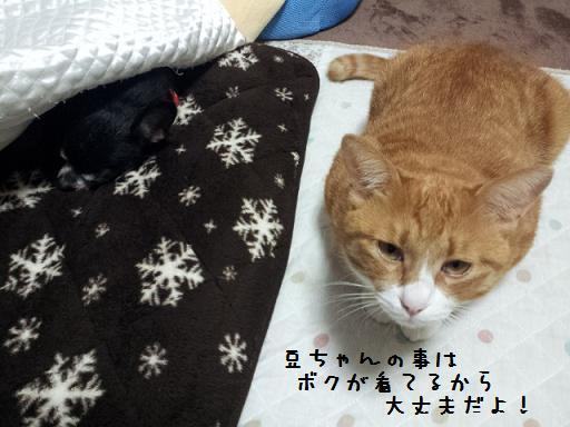 豆血尿でダウン&みぃ太②1016