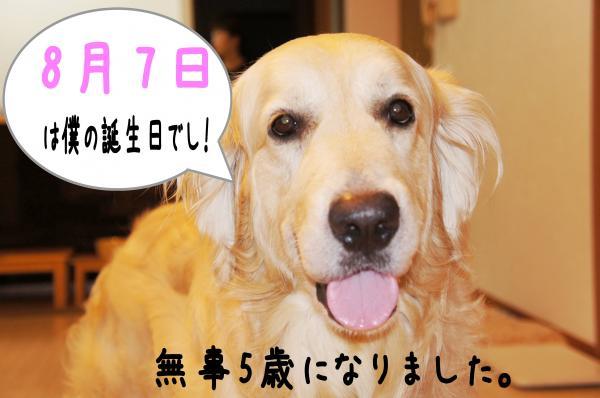 image3_convert_20130811235325.jpg