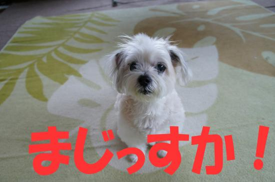 okayama8_convert_20130801081533.jpg