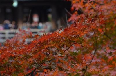 20131126_清水寺-003