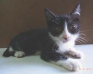 cat_26426_1.jpg