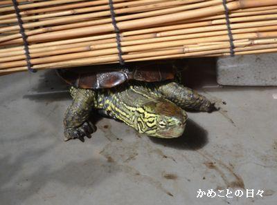DSC_0069-suke.jpg