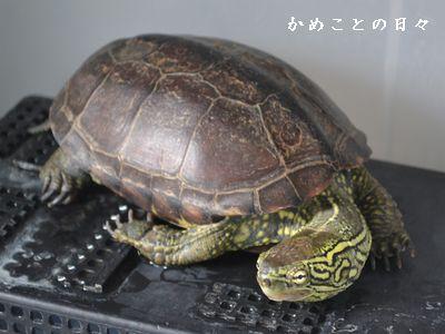 DSC_0099-suke.jpg