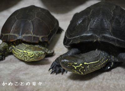 DSC_0118-sukeco.jpg