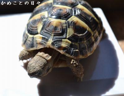 DSC_0131-fu.jpg