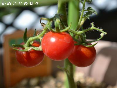 DSC_0191-peti.jpg