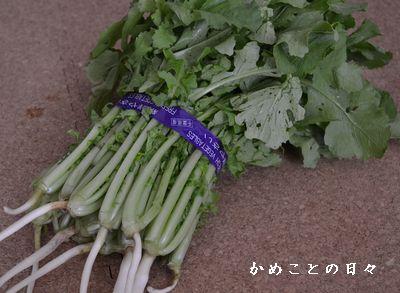 DSC_0211-dai.jpg
