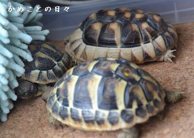 DSC_0227-riku.jpg