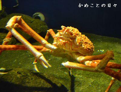 DSC_0260-taka.jpg