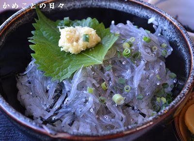 DSC_0380-shirasu.jpg