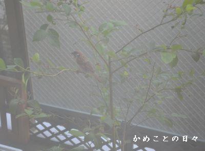 DSC_0411-suzu.jpg