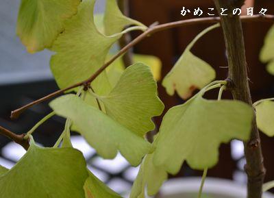 DSC_0506-ityo.jpg