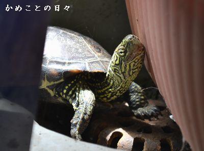 DSC_0591-suke.jpg