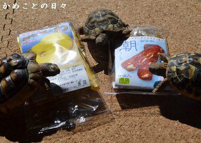 DSC_0609-coo.jpg