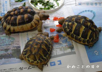 DSC_0609-kame.jpg