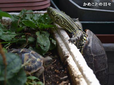 DSC_0636-kuisuke.jpg
