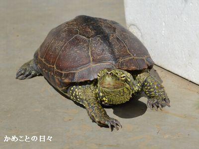 DSC_0646-suke.jpg