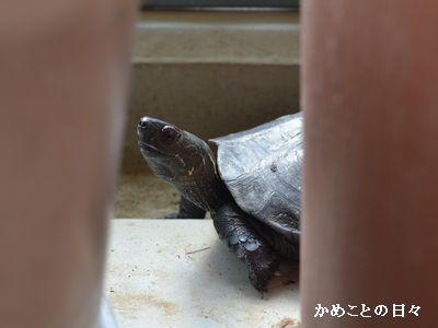 DSC_0683-kameco.jpg
