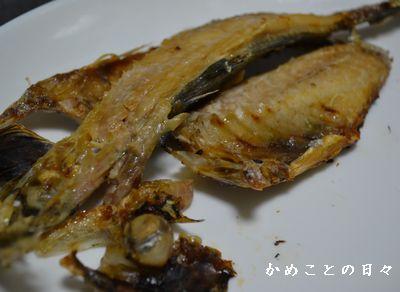 DSC_0687-aji.jpg