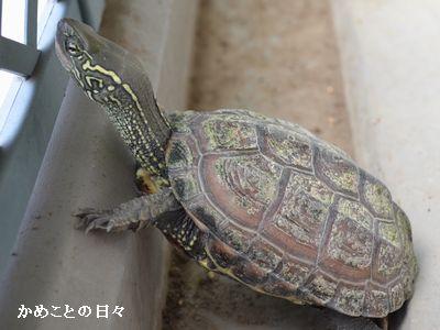 DSC_0690-kameki.jpg