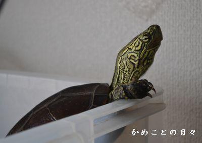 DSC_0745-suke.jpg