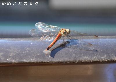 DSC_0746-tom.jpg