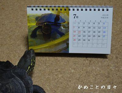DSC_0799-co.jpg