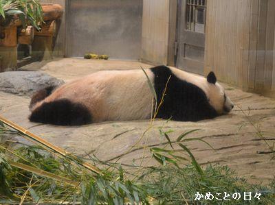 DSC_0848-panda.jpg