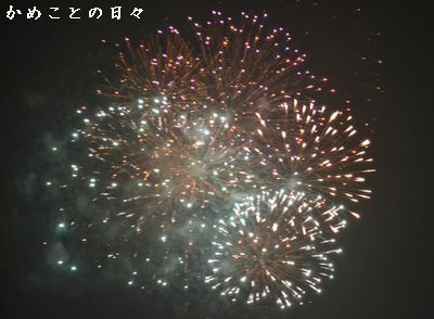 DSC_0917-hana.jpg