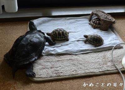 DSC_0974-riku.jpg