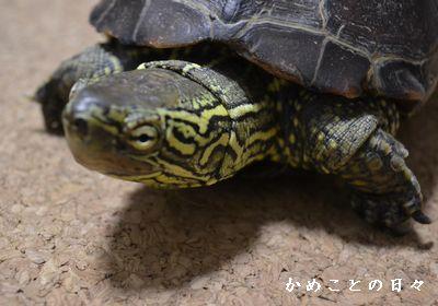 DSC_0993-suke.jpg